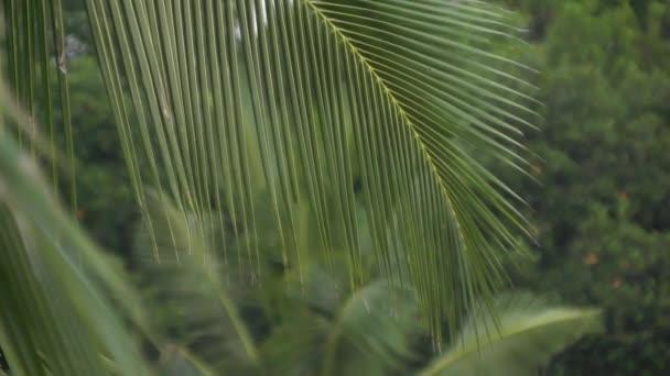 Životní džungle, palmy, přírodní fenomén, tropy, živočišný život