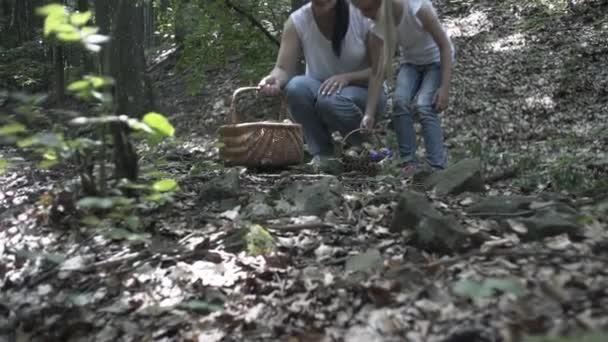 Rodina na pěší túry po lese. Šťastná rodina matky, otce a dcer, kteří se procházejí v jehličnatém lese a drží se za ruce. Rodiče ukazují dětem krásné stromy. Děti sbírají houby