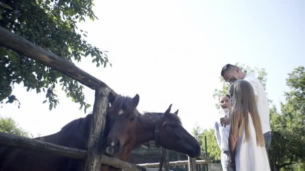 Kinder füttern Tiere, entspannen sich im Park, Hirsche, Pferde, Familie im Urlaub, spielen in einem Kontakt-Zoo.Kleine Mädchen füttern ein niedliches Hirsch.Nette Mädchen. Kinder füttern Hirsche.