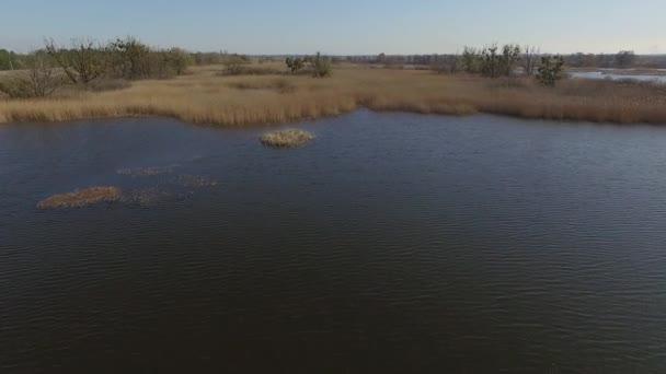 přeletěl řeku zarostlou rákosím