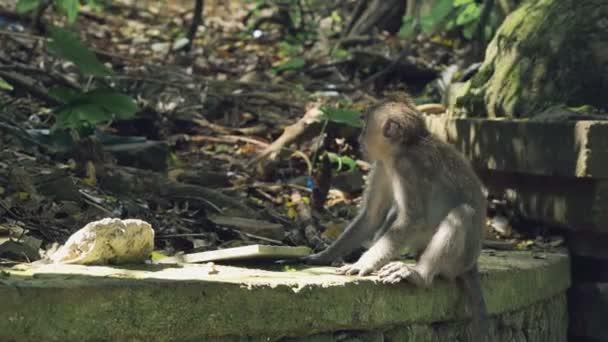 Kis majom ül a kőfal