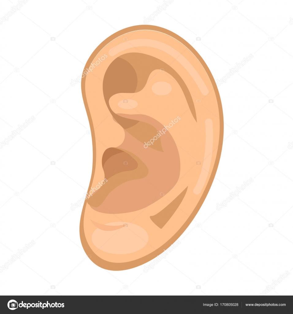 Estilo plano del icono de la oreja. Anatomía, concepto de medicina ...