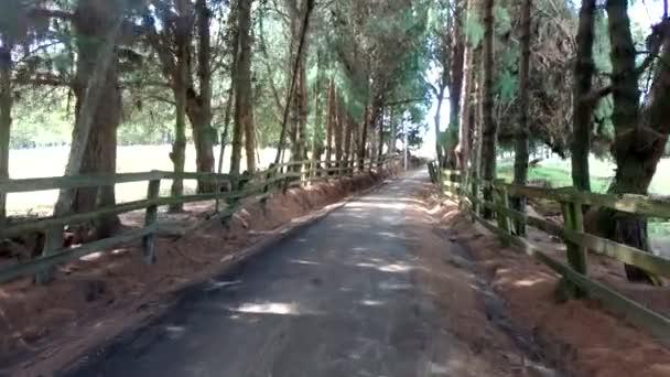 Procházka špinavou cestou se stromy po stranách