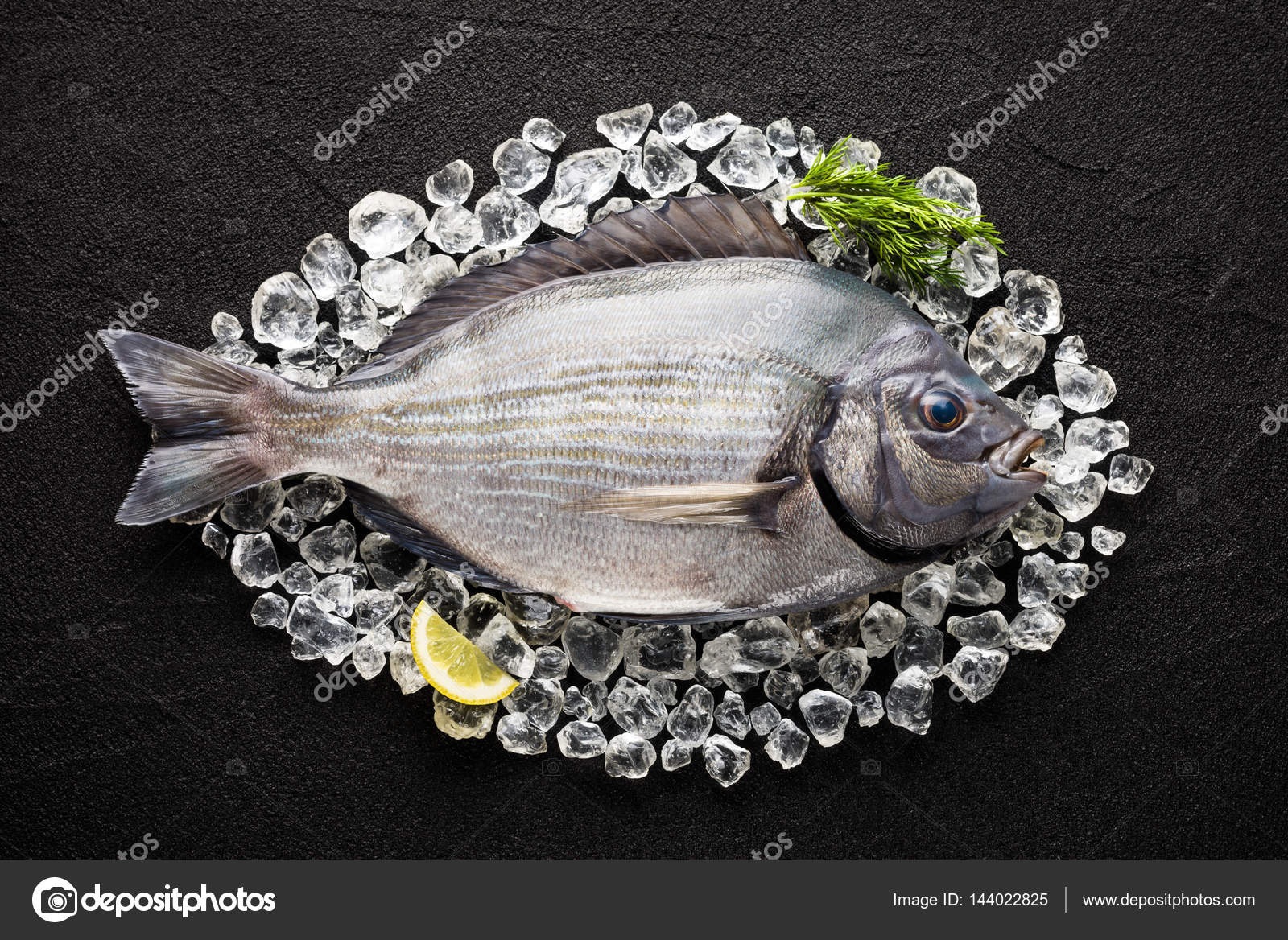 Fresh spanish bream fish sargo on ice on a black stone for Fish in spanish