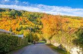 Paesaggio di autunno di Arrowtown, in Nuova Zelanda