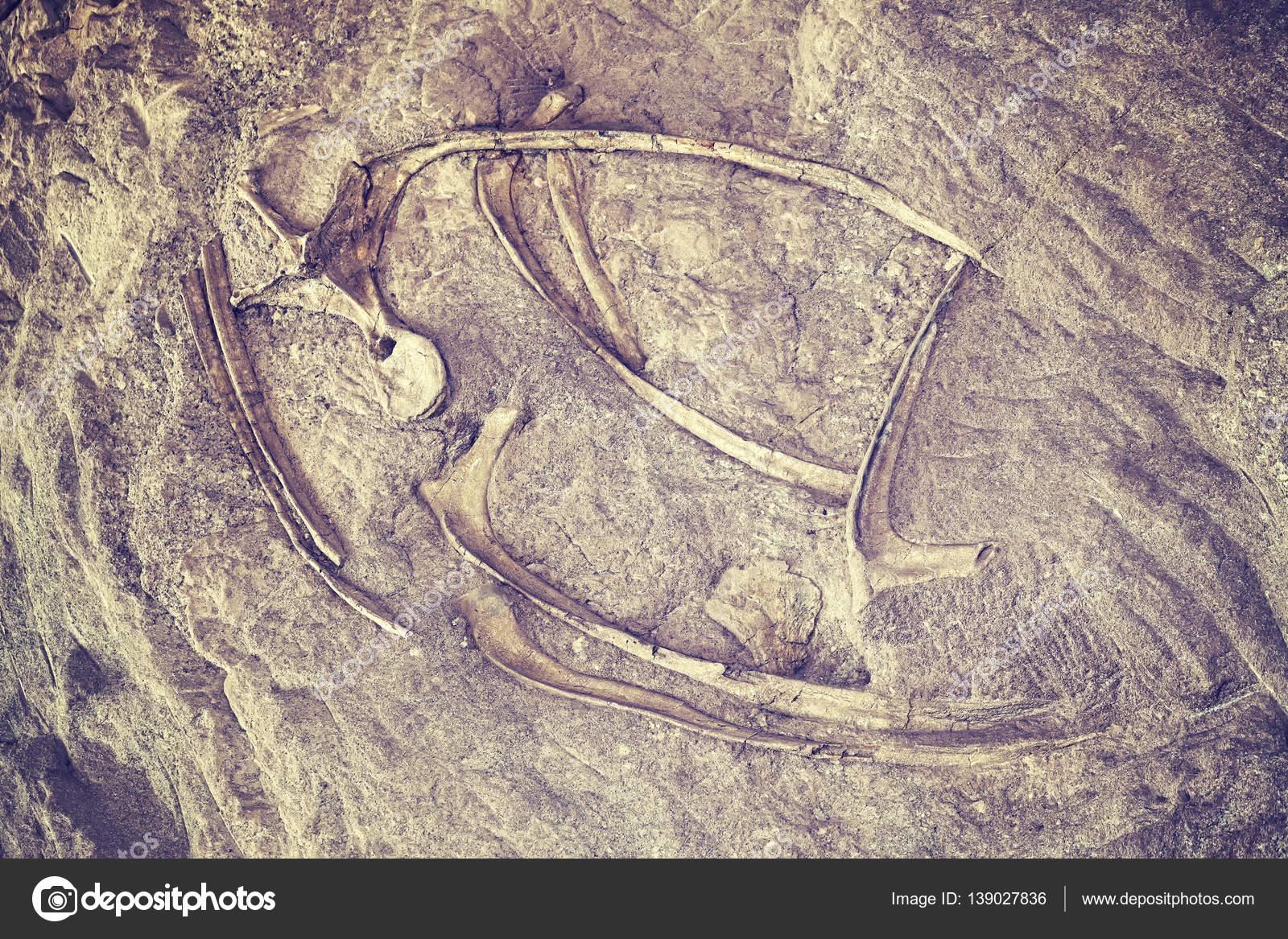 Esqueleto de dinosaurio de color entonado en el monumento nacional ...
