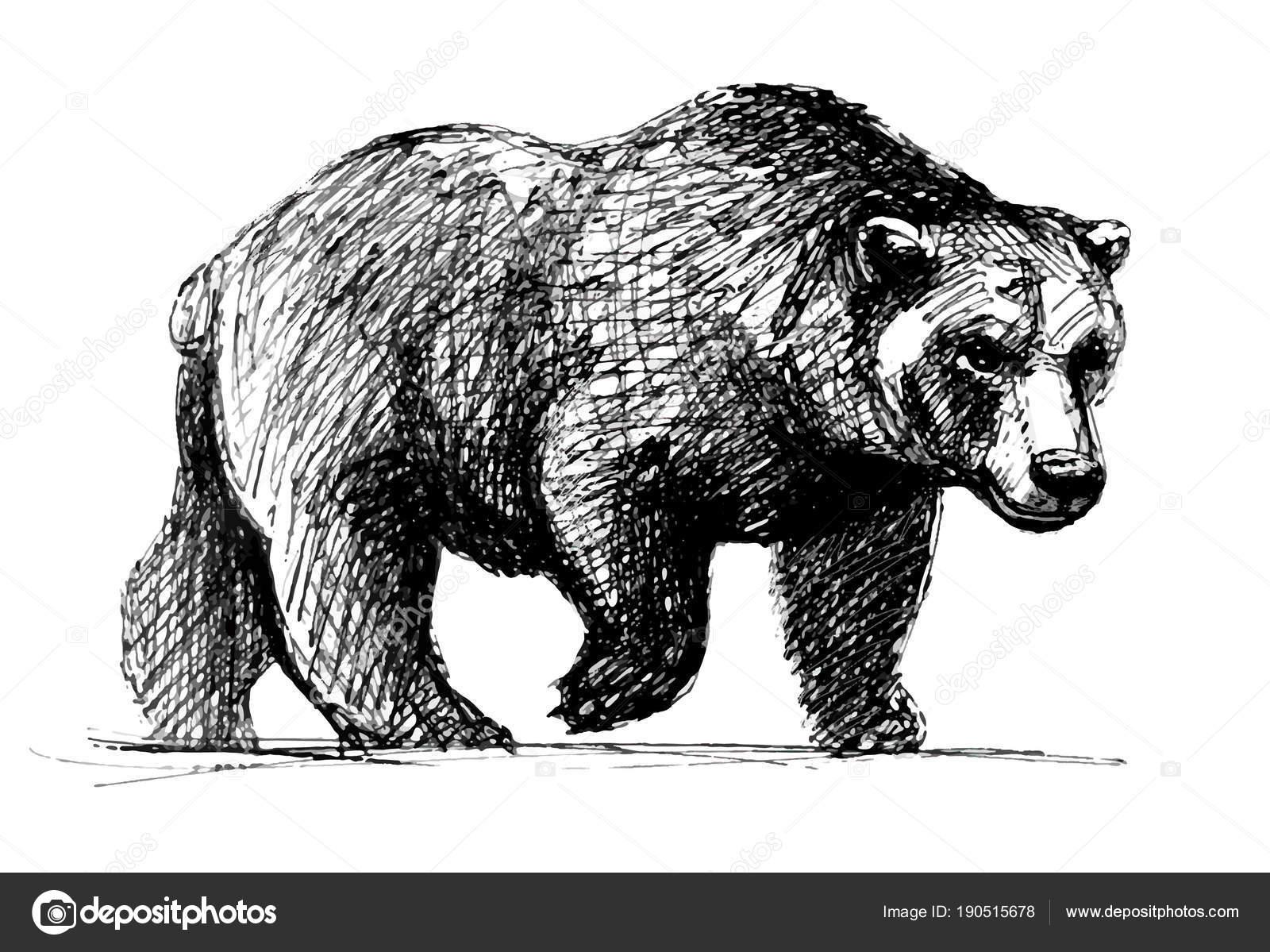 Séta Medve Vonalas Rajz — Stock Vektor © ozherelyeva ... Walking Bear Drawing