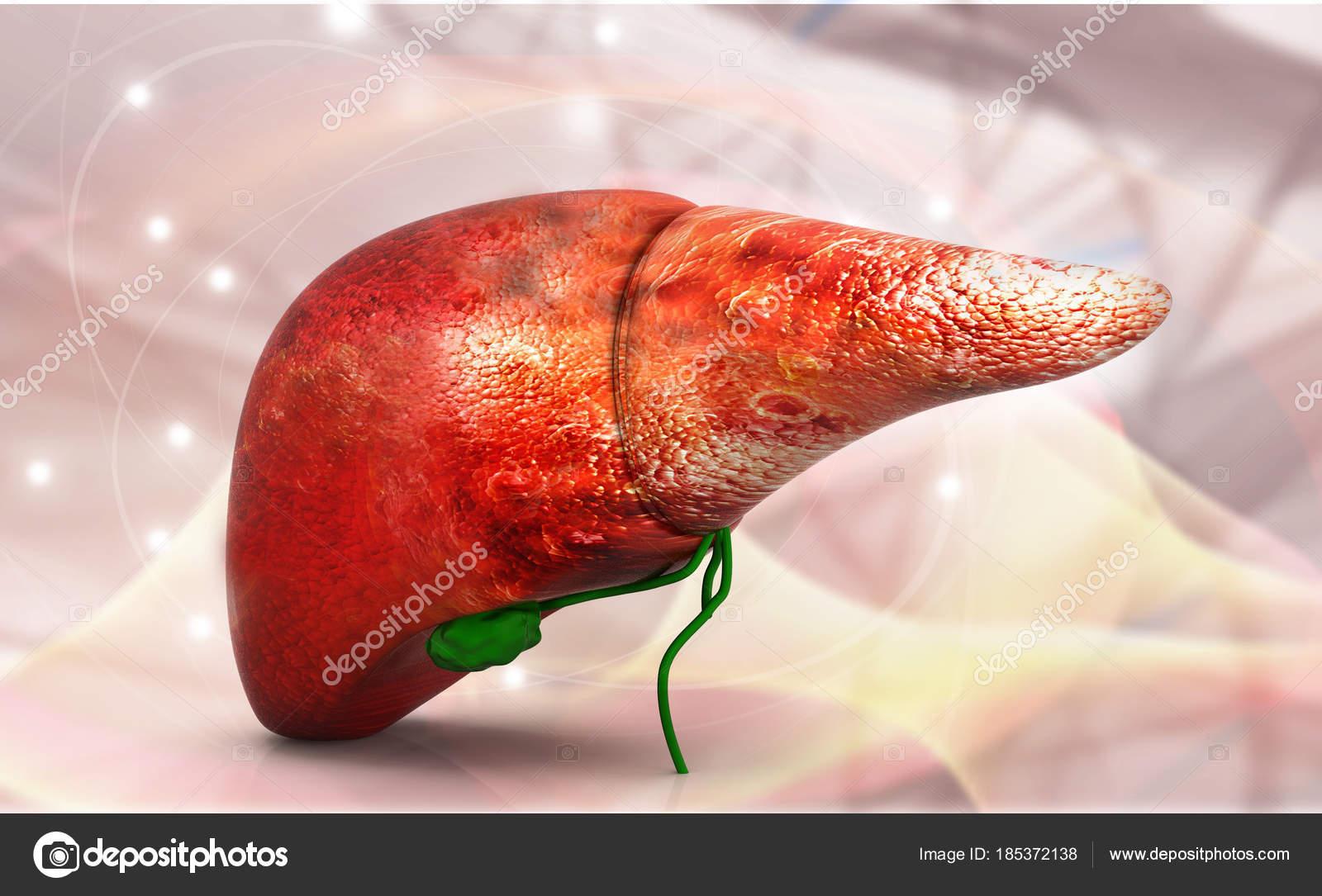 Human Liver Anatomy Dna Structure Render Stock Photo Bluebay2014