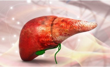 Human liver anatomy with dna structure, 3d render