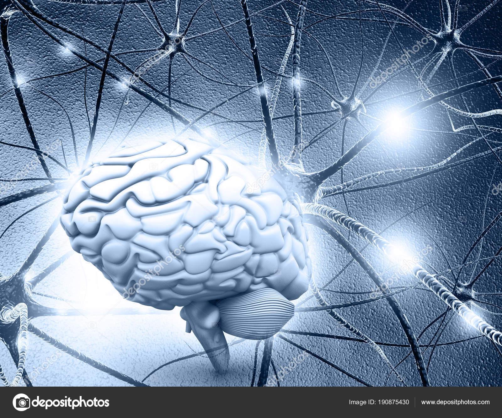 Menschliche Gehirn Und Neuron Zellen Auf Abstrakte Blauen ...