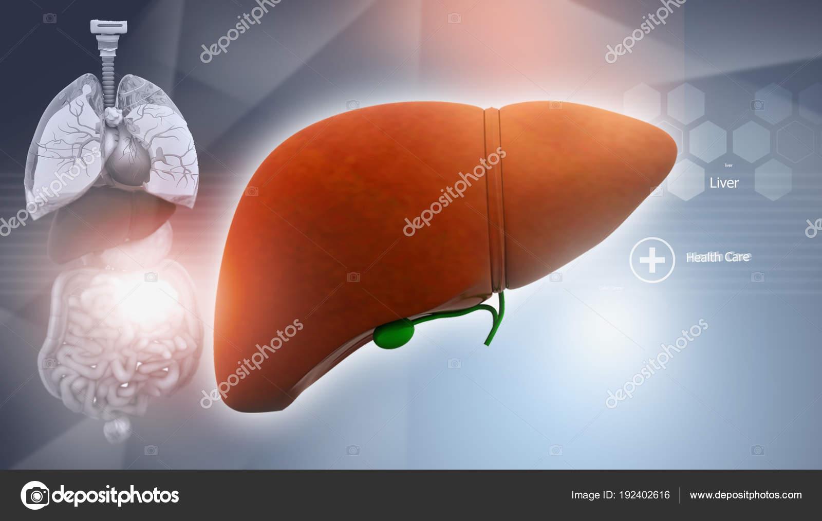 Anatomía Humana Con Hígado Ilustración — Fotos de Stock ...