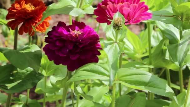 fiore, fiorelli, fiori, fleur, fleurs, flower, flowers