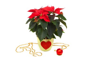 poinsettia and christmas decorations