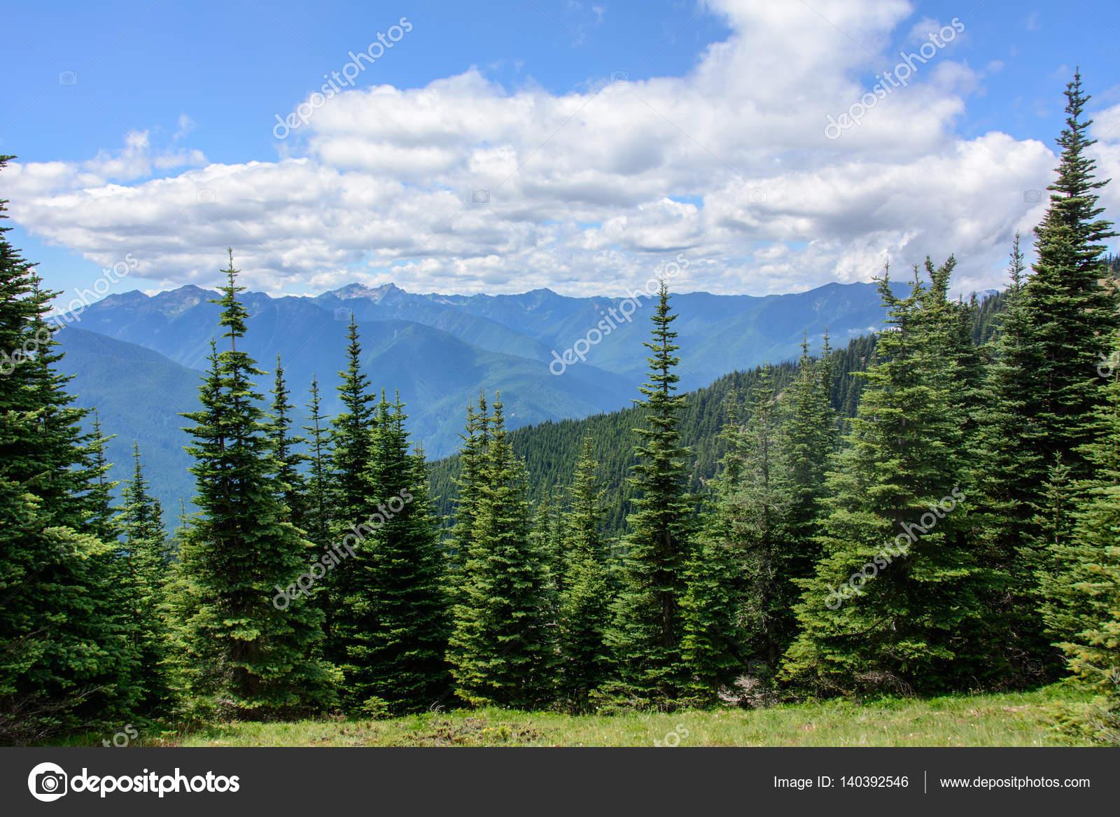 Lesnoj Pejzazh V Gorah Olimpijskij Nacionalnyj Park Shtat Vashington