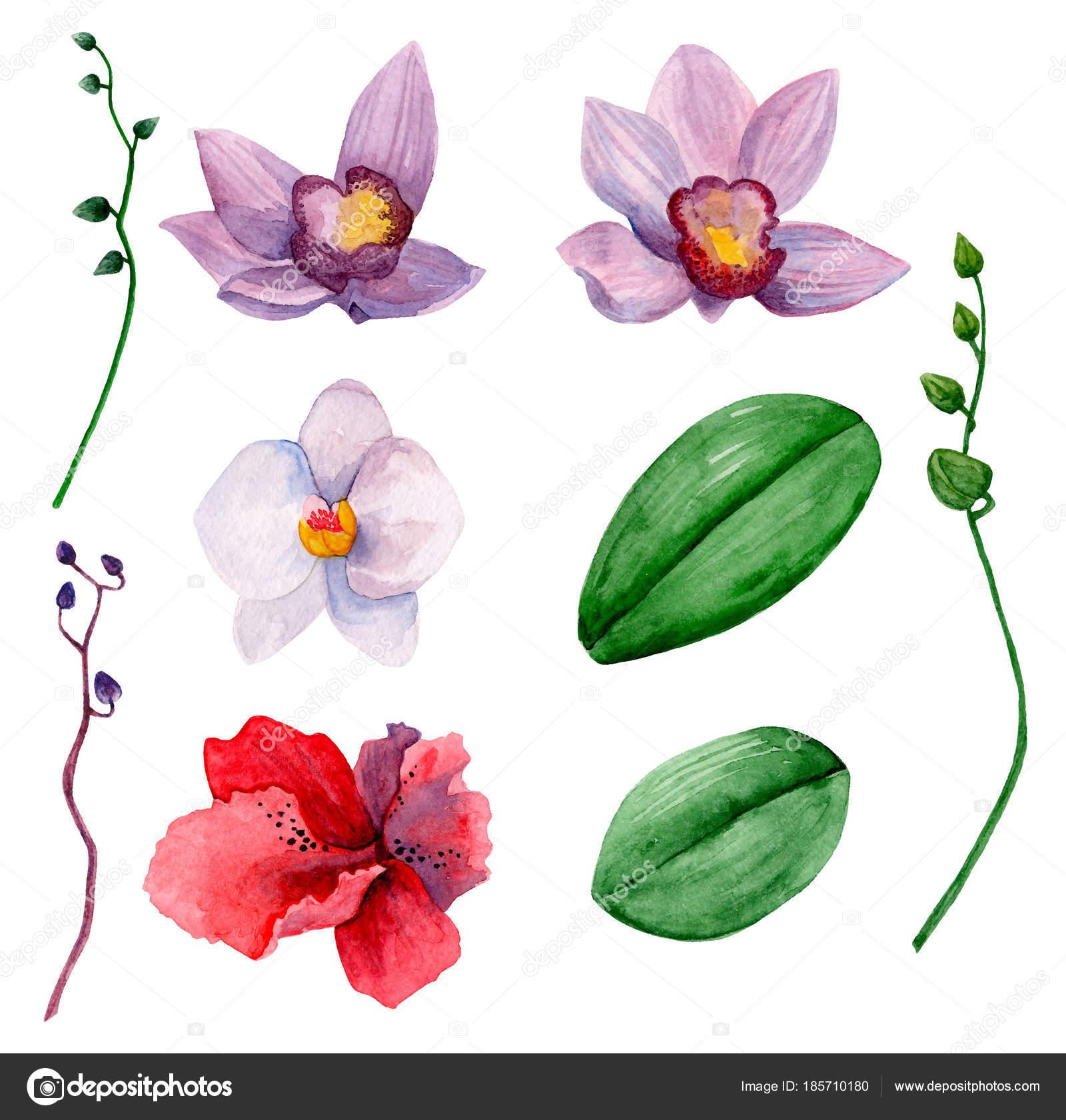 Hawaiian flowers vector clipart watercolor orchids clip art stock hawaiian flowers vector clipart watercolor orchids clip art stock vector izmirmasajfo