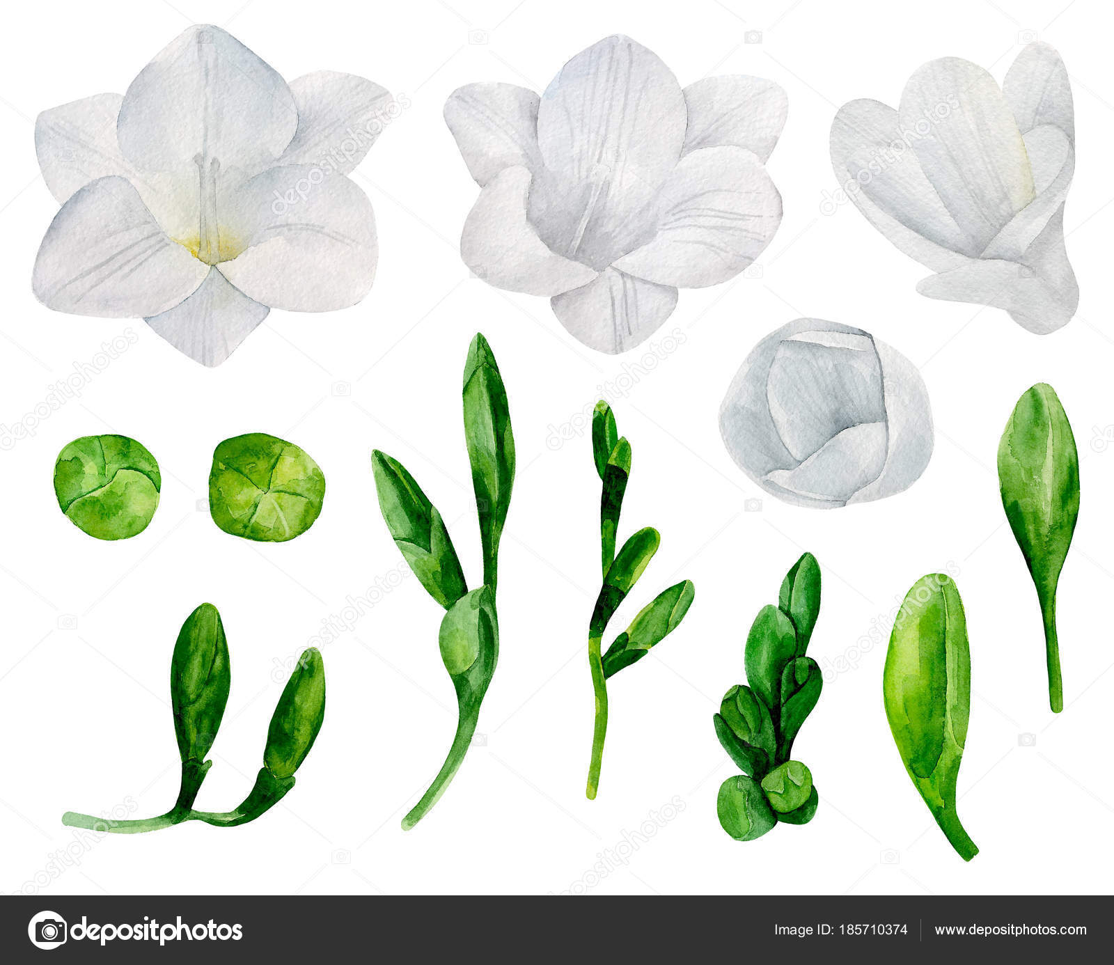 White freesia flowers vector clipart watercolor wedding floral white freesia flowers vector clipart watercolor wedding floral stock vector mightylinksfo