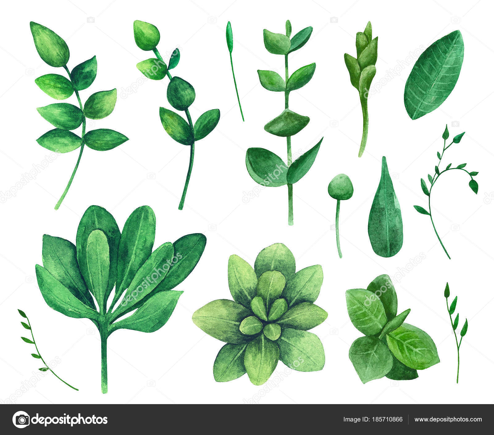 Watercolor Green Leaf Nature Vector Clip Art Summer Greenery Clipart Stock