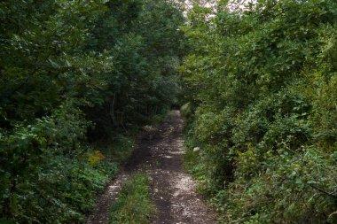 Green forest landscape, natural background.