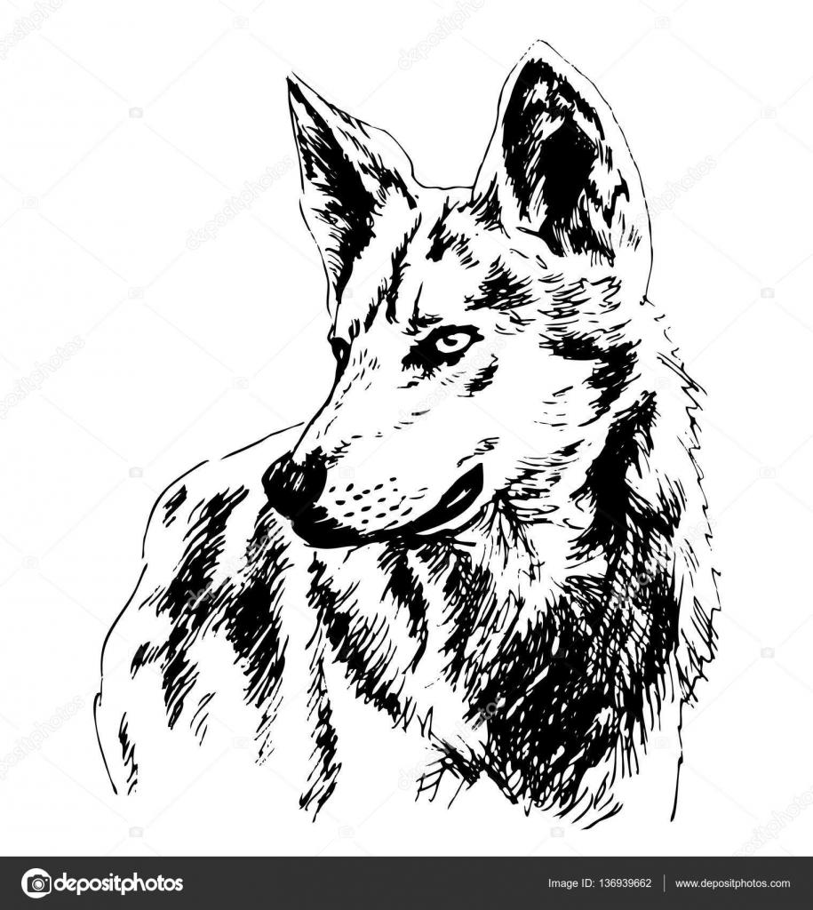 Hand skizzieren Wolfskopf — Stockvektor © onot #136939662