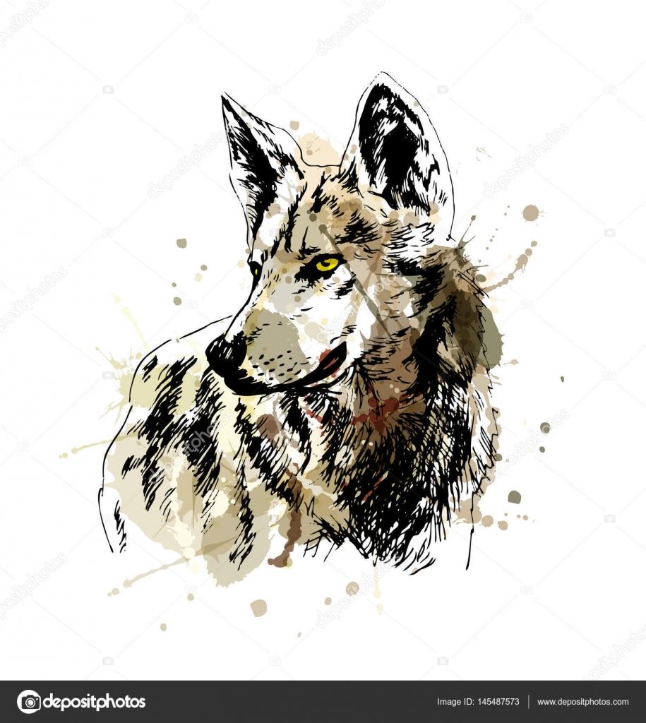 Dibujos Animales Carnivoros A Color Dibujo De Mano Color Lobos