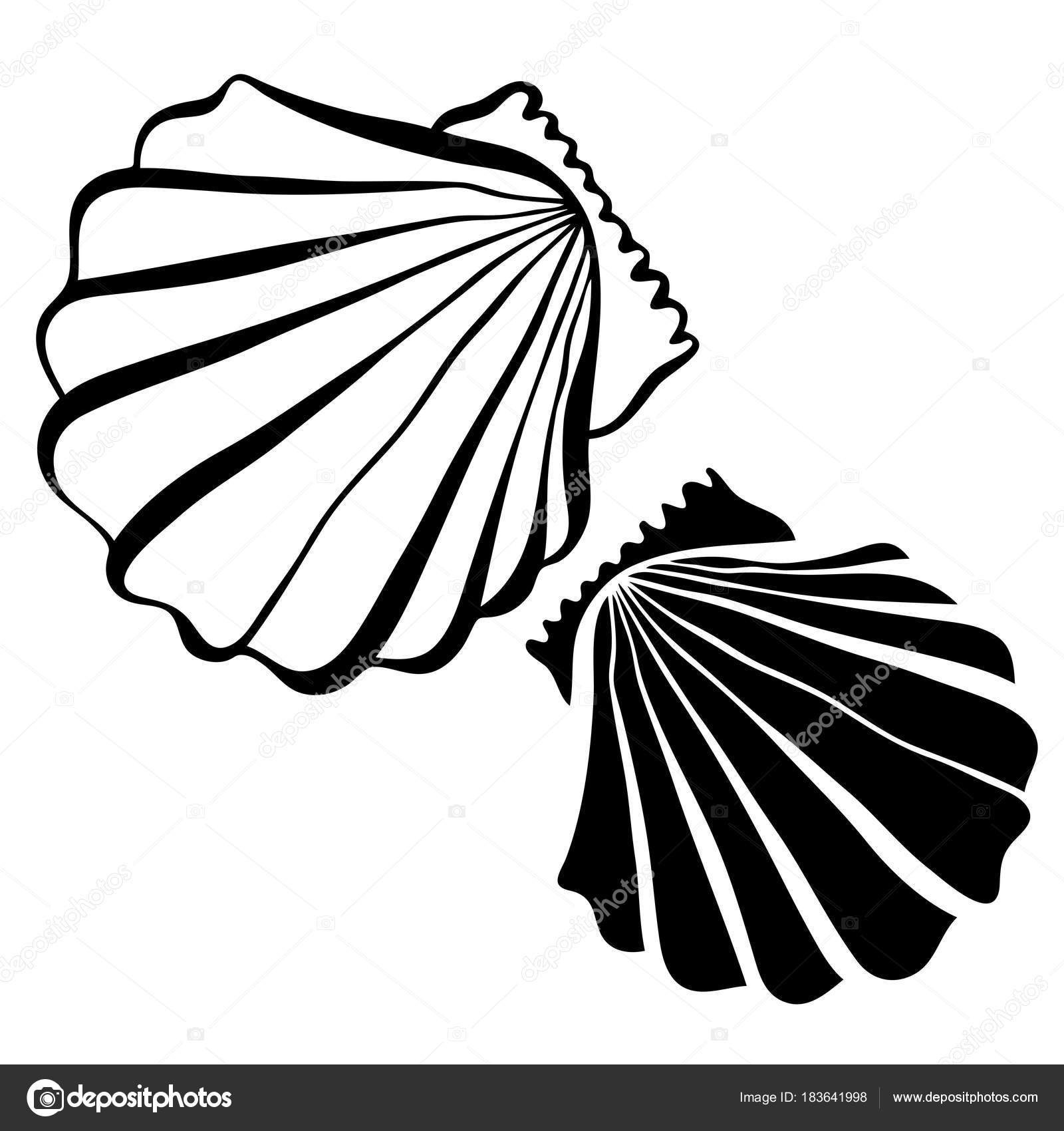 Vector black and white illustration with seashells stock vector