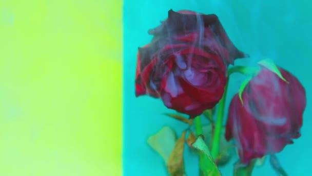Smoke and a beautiful rose. Birch-light green background