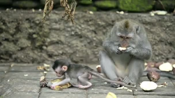 Mother monkey and baby monkey are eating fruit.