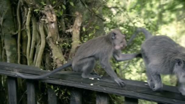 Секс тип обезьяна