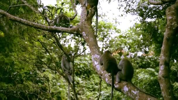 Affen auf einem Baum und bekämpfen einander.