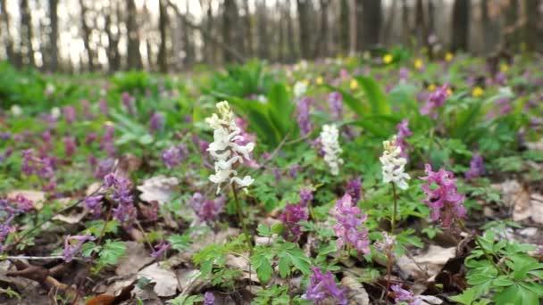 Na jaře se les probouzí, kvetou bílé a fialové květy.
