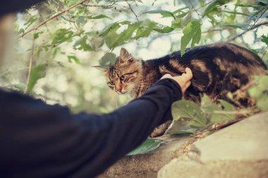female hand touching cat