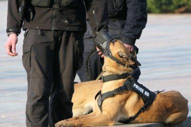 Sahibi ile bir nesneyi koruyan bir köpek..
