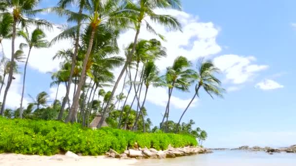 Tropický ostrov. Palem na písečné pláži