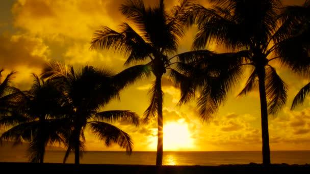 Pálmafák és naplemente Hawaii