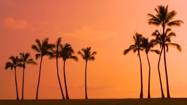 Tropické palmy a západy slunce