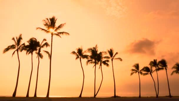 Tropické palmy a Hawaii západ slunce