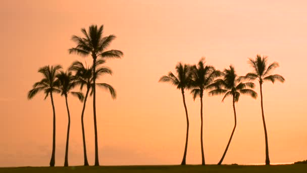 Tropical palm trees and Hawaii sunset