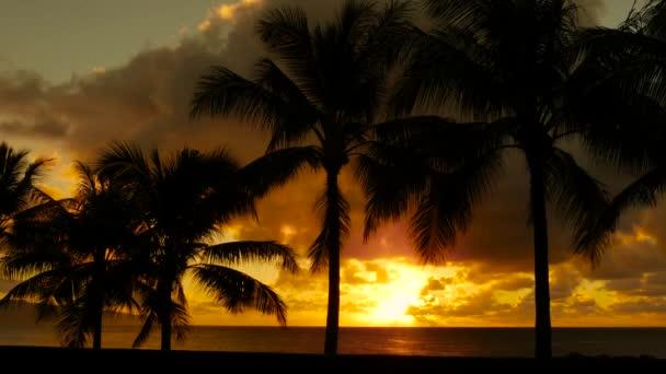 Naplemente a pálmafákon keresztül Hawaiin