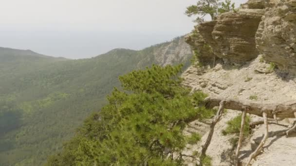 pásztázás lövés zöld hegyek hegyvidéki táj tűlevelű fa domb lánc címerek meres sziklafenyő fák ferde táj hegy erdő vad természet élőhely panoráma kilátás turizmus koncepció
