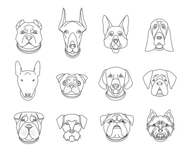 Popular breeds of dogs. 12 linear icons isolated on white