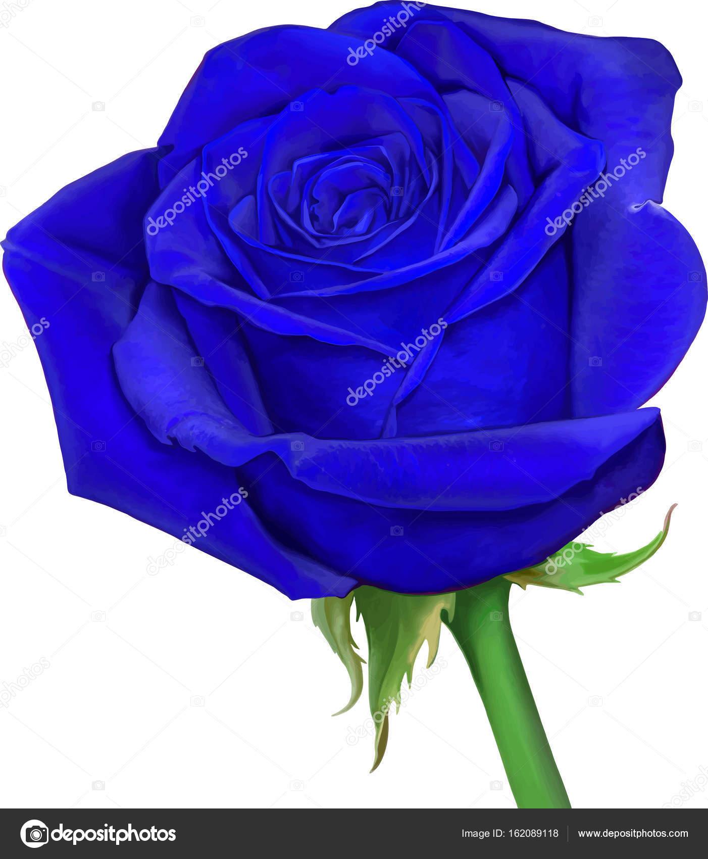 Belle Image Rose Bleu belle fleur rose bleu clair — photographie artnature © #162089118