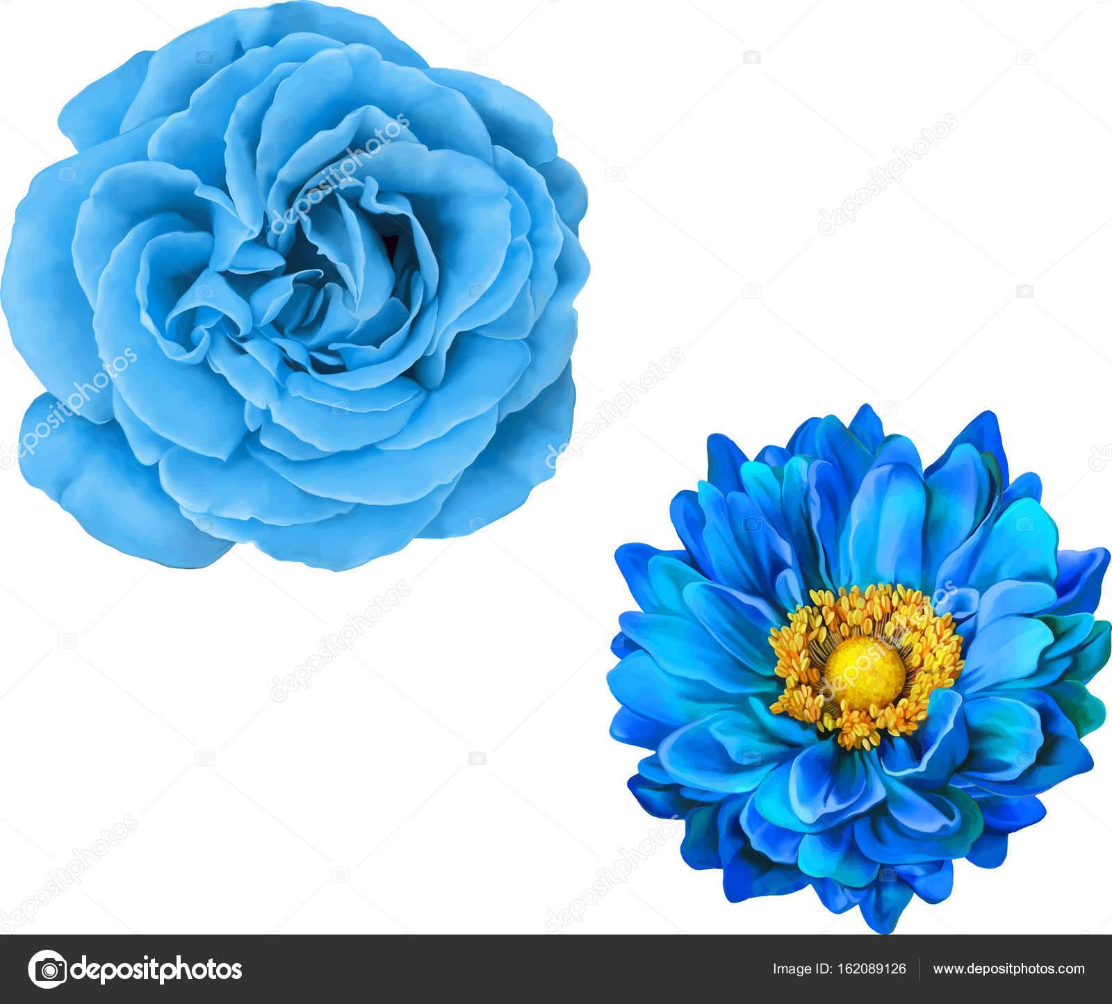Imágenes Rosas Azules Preciosas Conjunto De Hermosas Flores