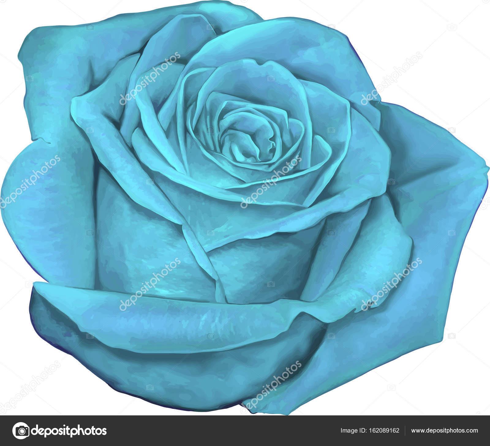 Belle Image Rose Bleu belle fleur rose bleu clair — photographie artnature © #162089162