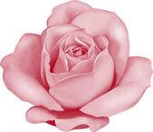 růžových poupat