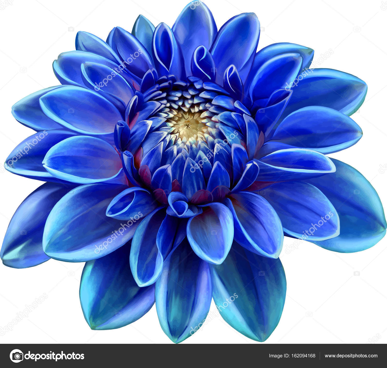 Beautiful Blue Round Dahlia Flower Stock Photo Artnature 162094168
