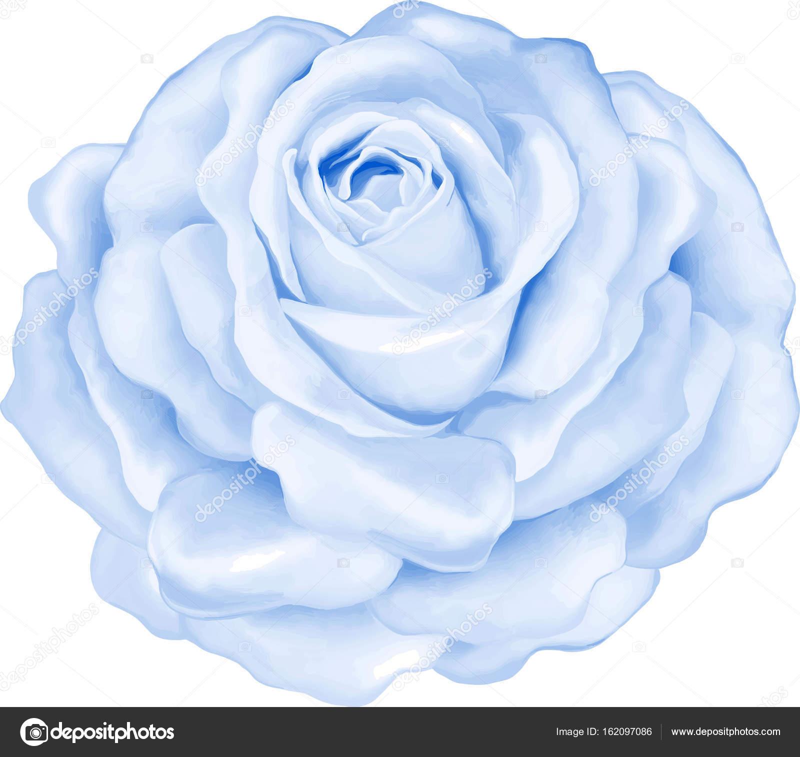 Belle Image Rose Bleu belle fleur rose bleu clair — photographie artnature © #162097086