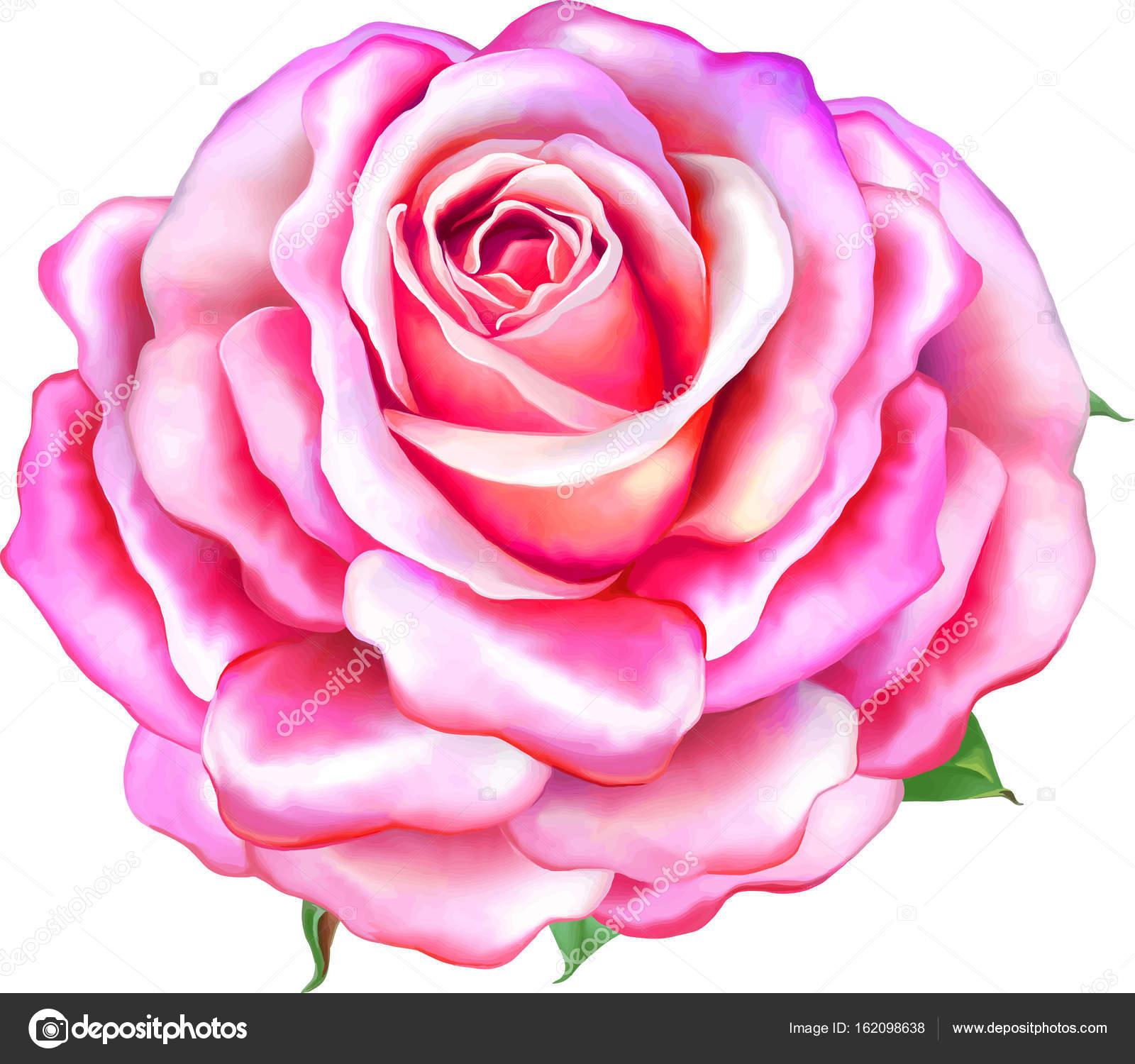 Beautiful Light Pink Rose Flower Stock Photo Artnature 162098638