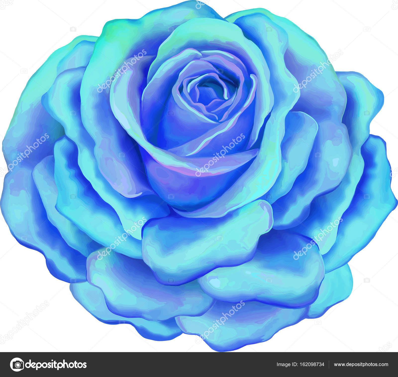 Belle Image Rose Bleu belle fleur rose bleu clair — photographie artnature © #162098734