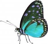 kis színes pillangó