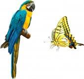 beautiful parrot macaw